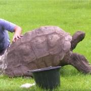 костенурката Джонатан
