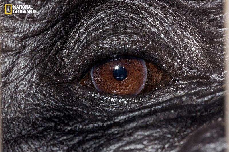 David Liittschwager / National Geographic