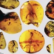 Гущер на 99 милиона години