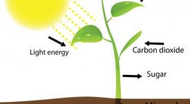 фотосинтеза