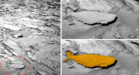 риба на Марс