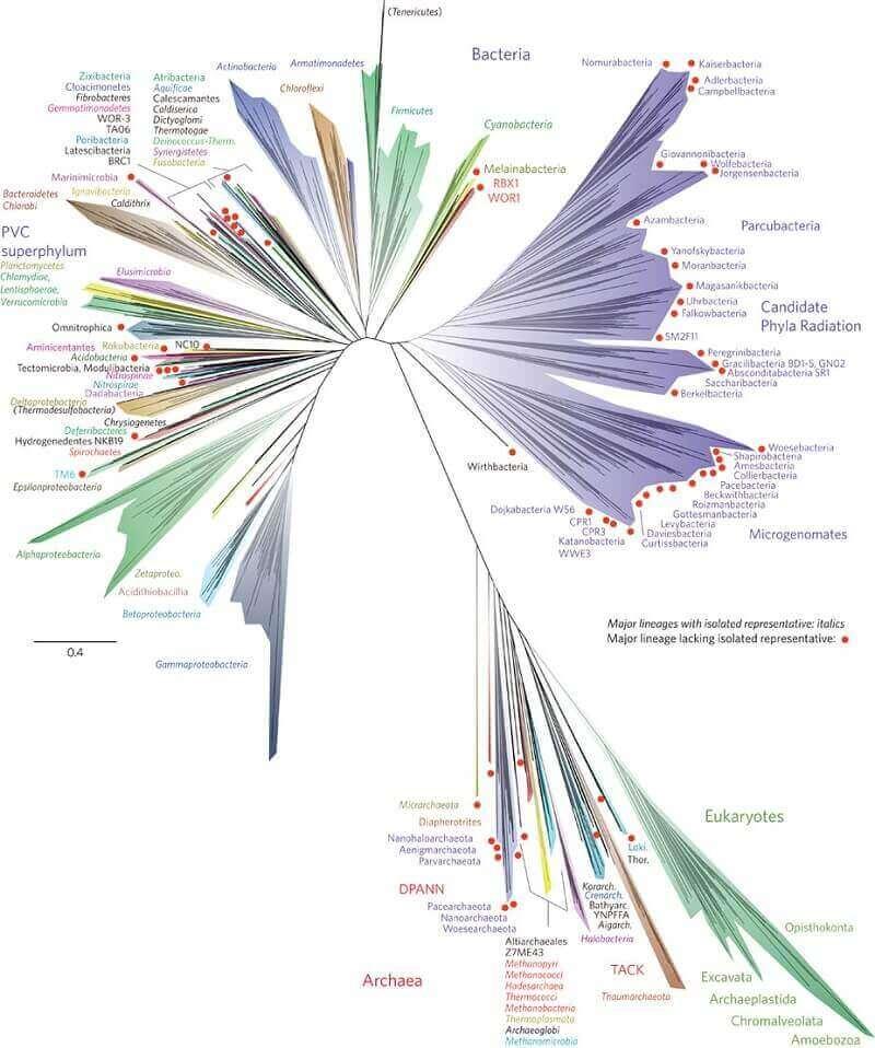 бактериално дърво на живота
