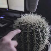 свирене на кактус