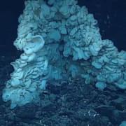 гигантска морска гъба