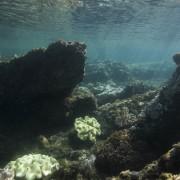 Подводен поглед към северната стена, една от няколкото руини, които сега изучават археолозите. © Seaunseen
