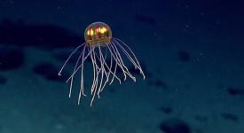 медуза, Марианска падина