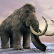 mammoth5