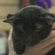 batman_the_cat