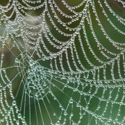 cobweb-4193_1280