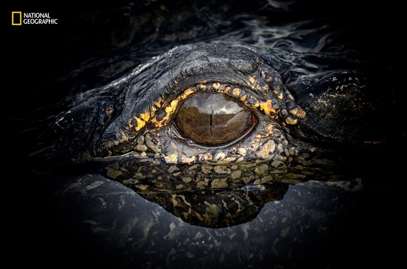 Nancy Elwood/ 2016 National Geographic Nature Photographer of the Year