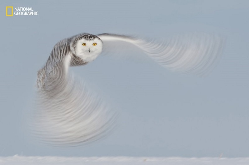 Aaron Baggenstos/ 2016 National Geographic Nature Photographer of the Year