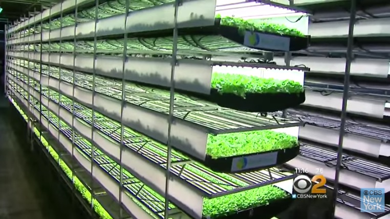 vertical_farming