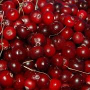 Червени боровинки