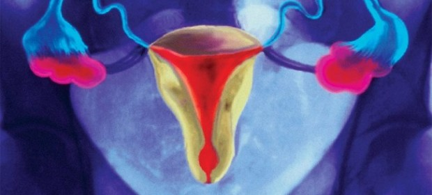 p6160229-female_reproductive_system_superimposed_on_x-ray-768x512