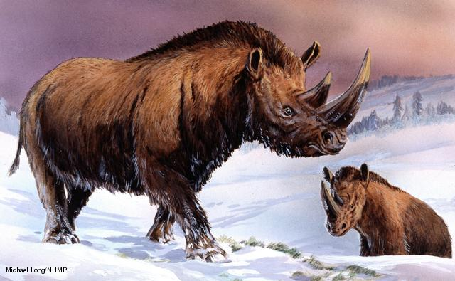 Artist's impression of Coelodonta antiquitatis 'Woolly rhinoceros' which roamed the tundra of Palaeartica during the Pleistocene 1.8 million to 10,000 years ago. Illustration by Michael Long.