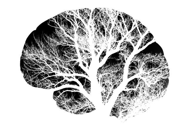 brain-2139197_640