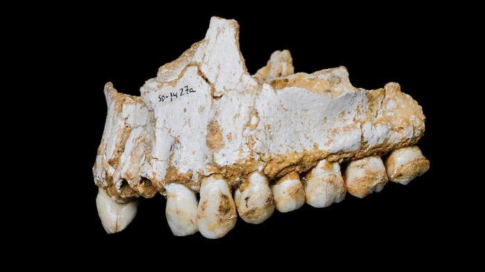 Горна челюст на неандерталец, открита в Ел Сидрон, Испания