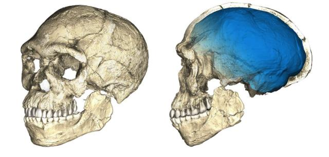 300000yearold_skulls_that_look_shockingly-6982d0f23e1a64f48d90bd353b8b9d03