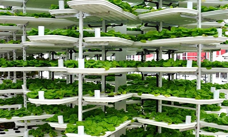 вертикално земеделие