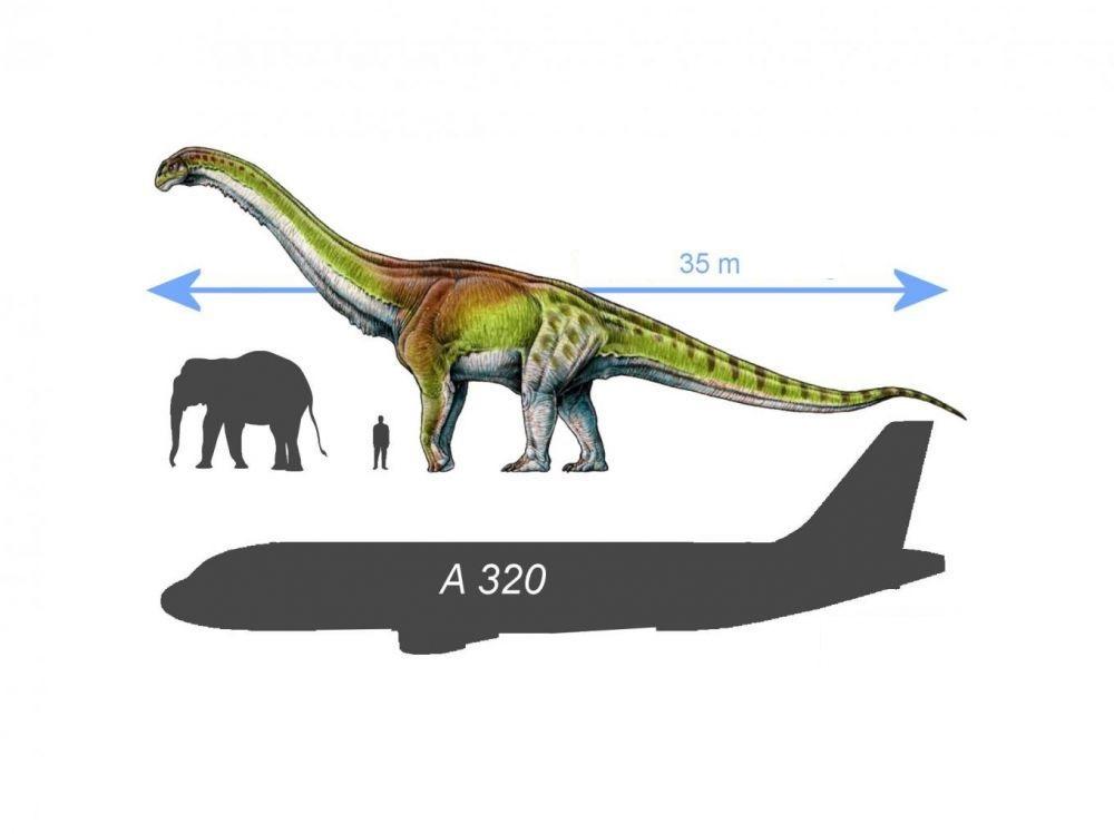 Сравнителна скала за мащабиране: Patagotitan mayorum, Airbus A320, човек и слон