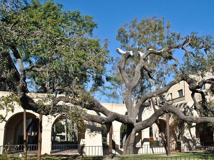 3-california-institute-of-technology-tie