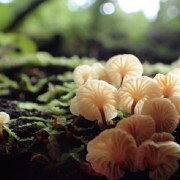 Fungi-made-life-on-Earth-possible-researchers-claim