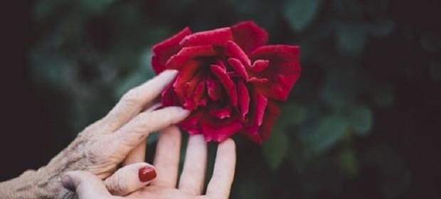 flower-2577944__340