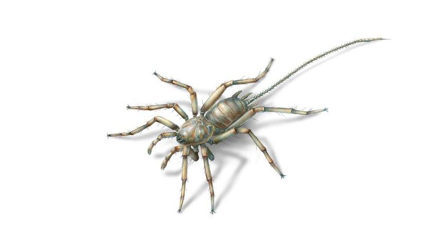 Паякът - химера открит в кехлибар. University of Kansas/ KU News Service