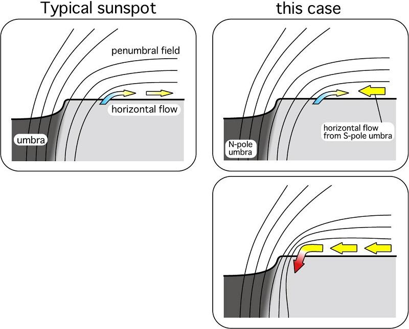"""Типично слънчево петно сравнено с """"чудовищно"""" - monster слънчево петно, каквото е наблюдавано от японските астрономи. (NAOJ)"""