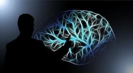 brain-3141247_640
