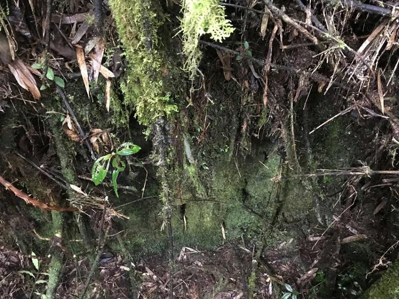 Новооткритата находка наистина е неразпознаваема под гъстата растителност.